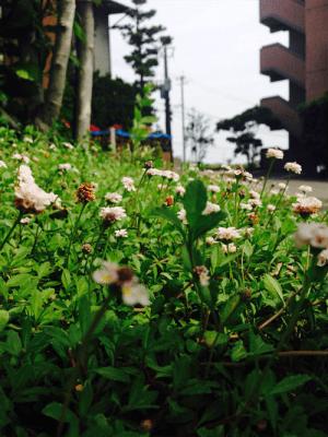 photo1 (1)_R