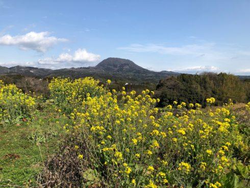 由布市にて完成見学会を開催します。会場は高崎山をのぞめる大景観がのぞめる家。