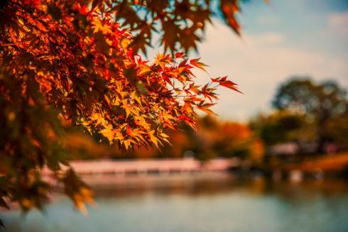 日本ハウジング秋の完成見学会